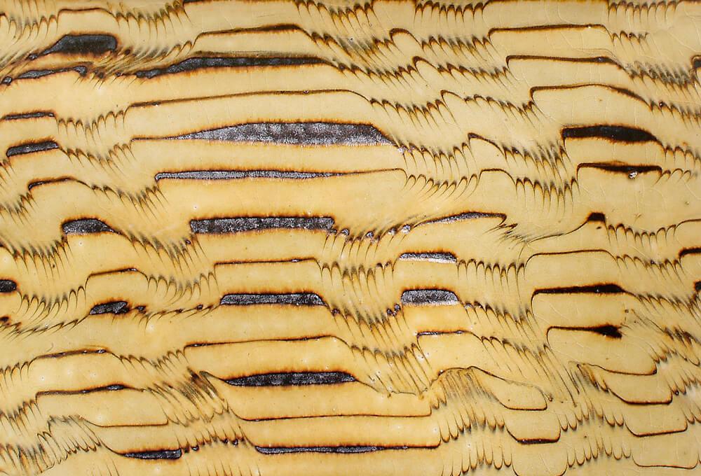 2006年7月6日から開催の「柴田 雅章 スリップウェア展」の画像3