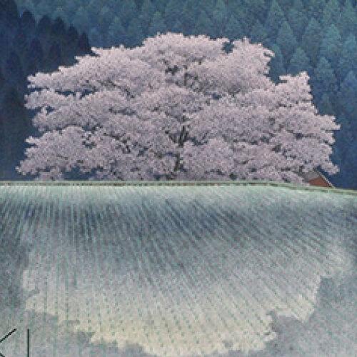 2015年1月10日から開催の「季もよう 角島 直樹 日本画展」のサムネイル画像